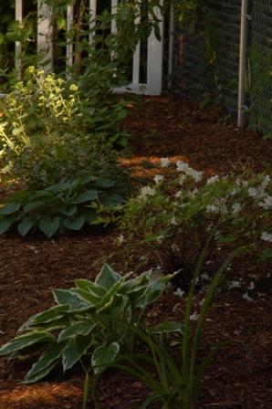 Garden Katha - Tale Of A Garden Enthusiast