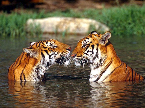 Tiger Trust India Partners With Clemson University