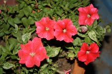 Garden Katha - Spring Has Arrived