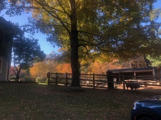 A Day Long Yoga And Meditation Retreat At A Sanctuary In Sherborn, MA