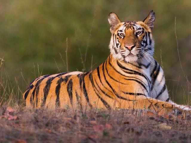 Wildlife SOS - Take Action