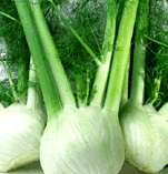 A Comprehensive Guide On How To Grow Fennel